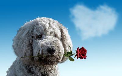 ¿Solo celebras San Valentín el 14 de febrero?